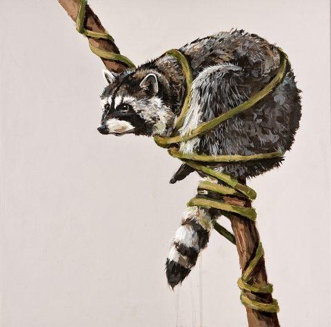 Tethered_Raccoon