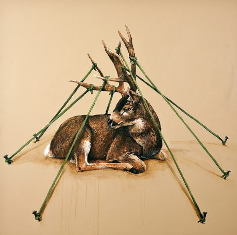 Tethered_Stag